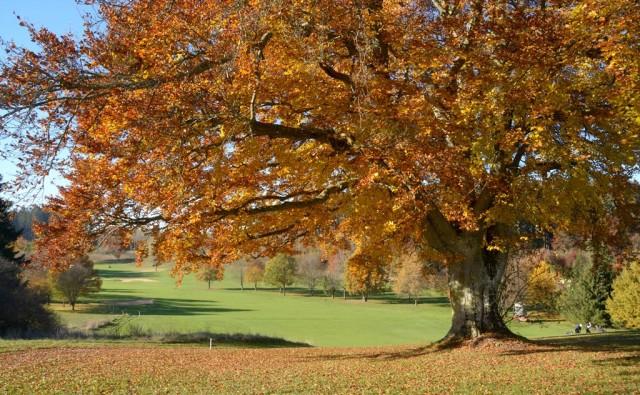 Viele Löcher des Starnberger Golfclubs erhalten durch ihre alten, prächtigen Bäume Charakter und Charme.